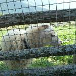 Recinto delle pecore e delle capre