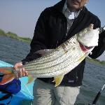 7 kg tigerfish