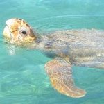 Sea turtle right beside out boat!