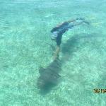 Rene with  a nurse shark