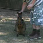 One of the many marsupials