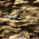 Iguana on 99 steps walking tour