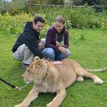 private meeting with a 14 months old lion