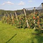 Herbst im Apfelland 2