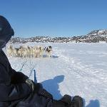 My Sled Dog Ride