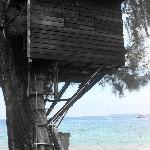 Tree house in front TDC