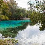 Alexander Springs at Ocala National Forest (few minutes from hotel)