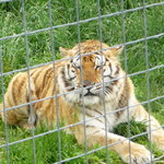 Wisconsin Big Cat Rescue