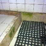 Bathroom and algae
