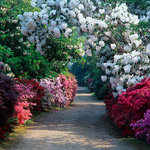 Spring at Exbury - the Home Wood pathways are ablaze with colour