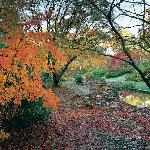 Exbury has been listed in the Top 10 places to see autumn colour in the country