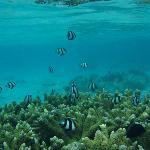 reef is lovely