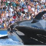 One Ocean Shamu show at Sea World