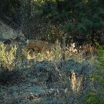 Deer behind the motel