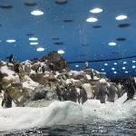 Loro Parque Penguins