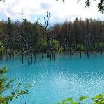 通称「青い池」
