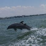 Mama & Baby Dolphin Jumping while on the Little Toot