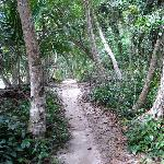 Trail to Cahuita Point, in the park