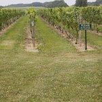 Palmer Vineyards Foto