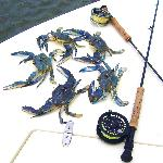Blue Crabs from Bay Bottom