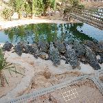 croc farm.... a must