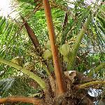 Palm tree nearby