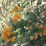 flores que abundan en los patios