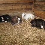 Where the little ones sleep.