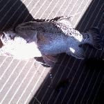 Marcus' Dhufish