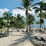 Maravilla de playa, con palmeras