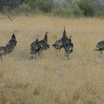 flock 2