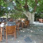 breakfast area under mulberry tree