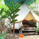 Shared Safari Tent