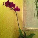 Hermosas Orquideas