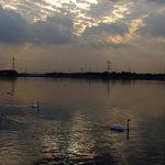 公園岬から夕焼けの手賀沼とハクチョウ