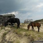 Horses on dunes.