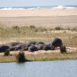 Hippo's on the beach