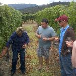 Vineyard tour and grape tasting