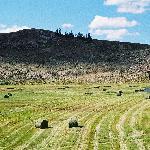 Go south on Rt. 114 along Cochetopa Creek