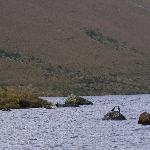 Ozogoche, gaviotas a 3800 msnm