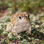 Toad at Night