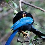 Amazing birds!