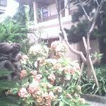 garden of 14 roses