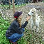 A friendly alpaca named Brutus :-)