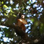 lo scoiattolo affamato con la sua preda