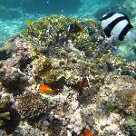 サンゴとサカナたち