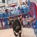 the bull running