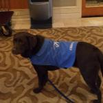 Cessna - the hotel dog
