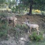 Roadside deer, near Estes Park, Sept 2011