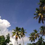 palms at maho